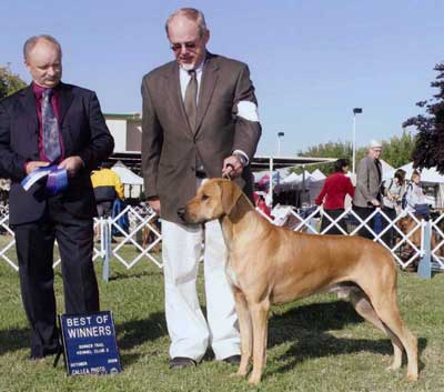 California Akc Dog Shows